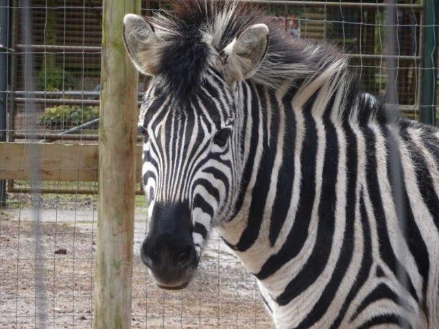Zebra-Adventure-Guides