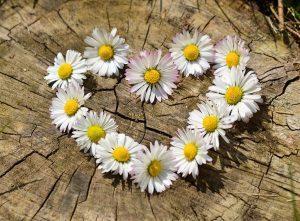 daisy-love-heart
