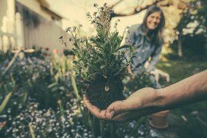 hand-gardening